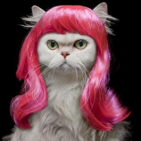 Pet Wigs Are So Hot Right Now geekgirl Geekgirl