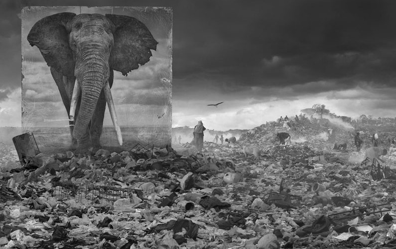 WASTELAND-WITH-ELEPHANT