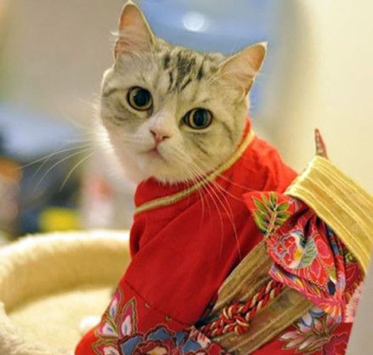 cats-in-kimonos