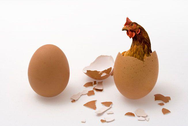 cellular-eggriculture