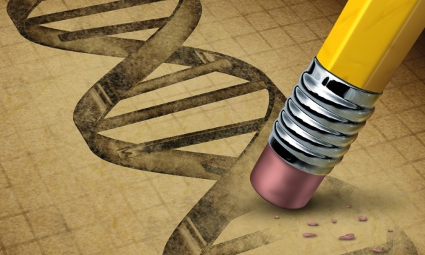 Photograph: DNA Shutterstock
